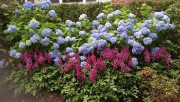 Flowering Shrubs